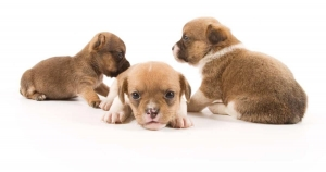 ブリーダー監修|悪質・優良ブリーダーの見分け方。心身ともに健康な子犬を迎え入れるには?