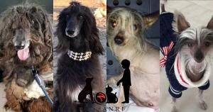 ANRI(アンリ) 歌手Monetが完全飼育で里親を探すー動物虐待も課題に